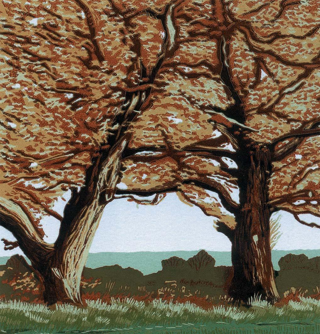 Autumn Trees, 20x20cm, ed: 20, £150