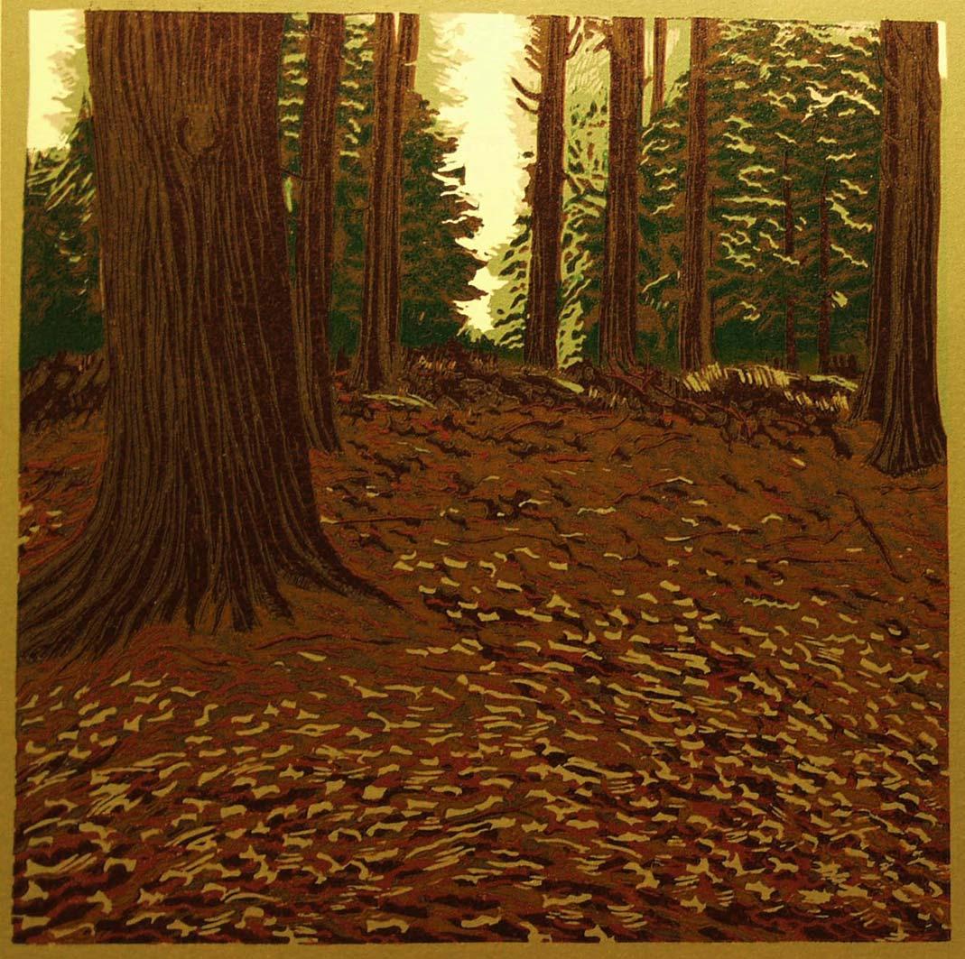 Stourhead Woods, 20x20cm, ed: 15, £150