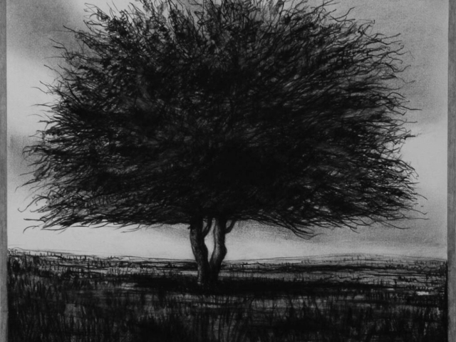 Hawthorn Tree (2), charcoal & conte, private collection