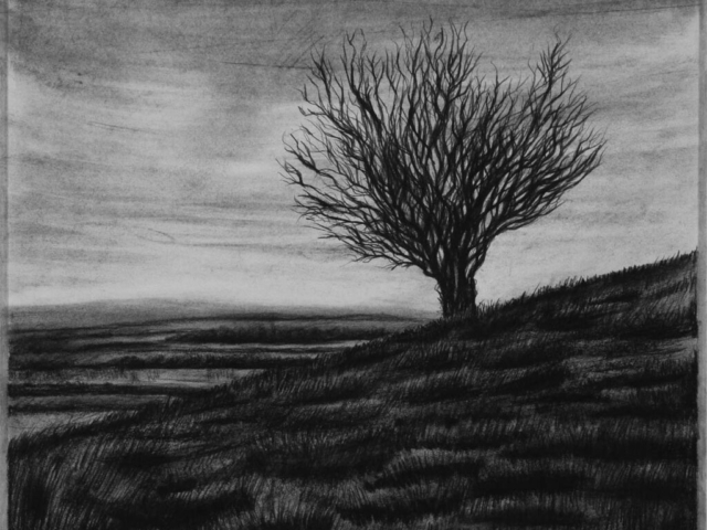 On Hambledon Hill, charcoal & conte, private collection