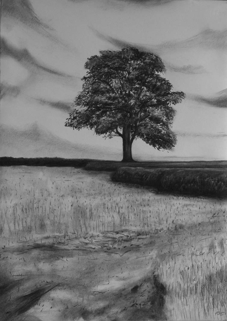 Tree on Dartmoor, charcoal, private collection