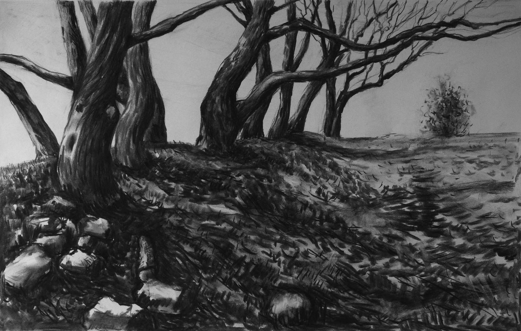 Tamar Valley Old Trees, charcoal, 40x60cm
