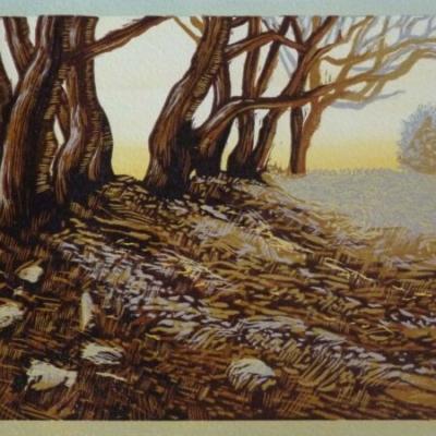Tamar Valley Old Trees, 15x22cm, ed: 25, £130