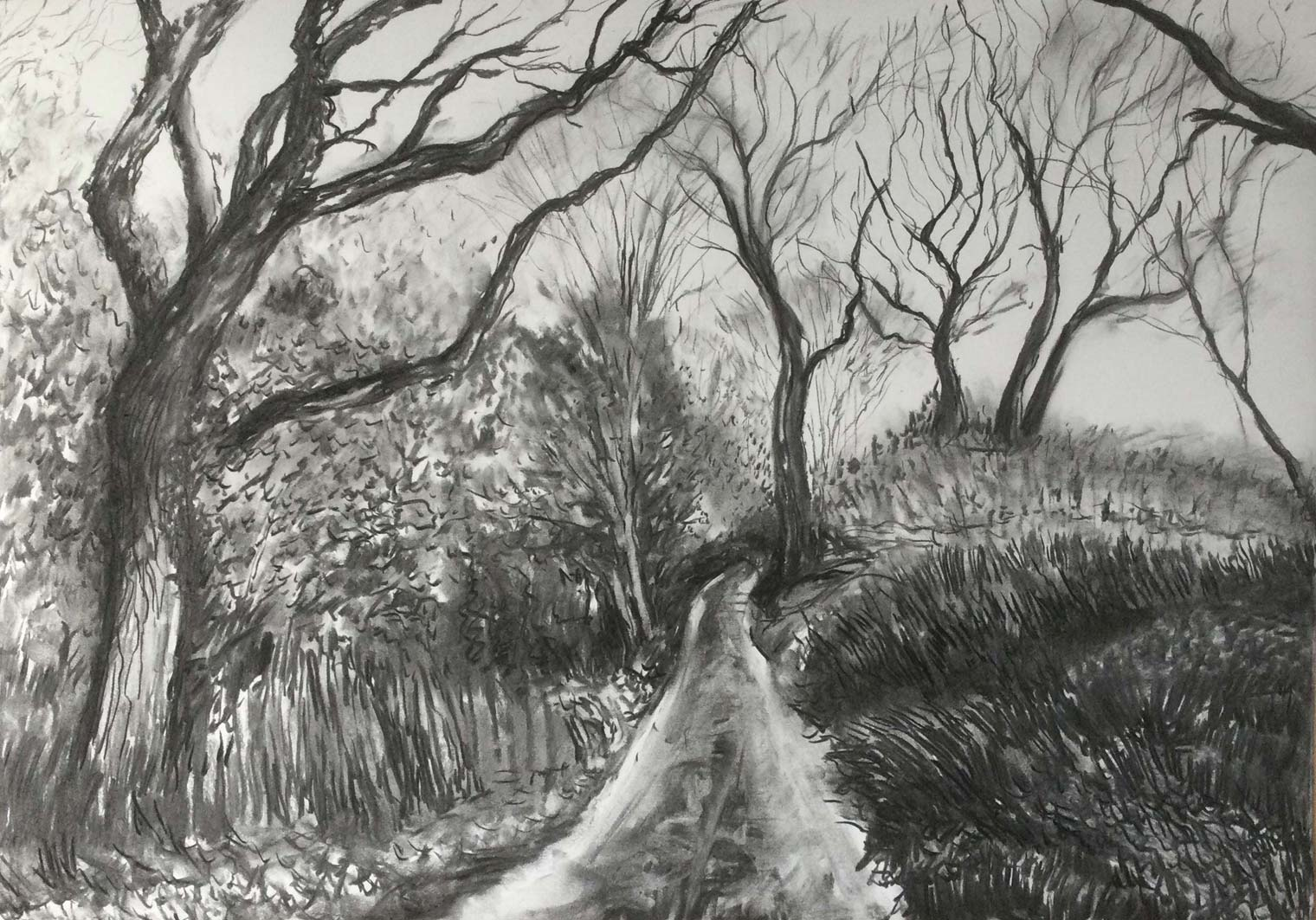 Winter Track, charcoal, 53x76cm