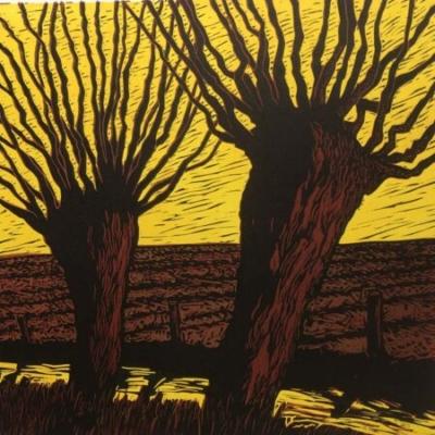 Willows, 30x30cm, ed: 25, £180