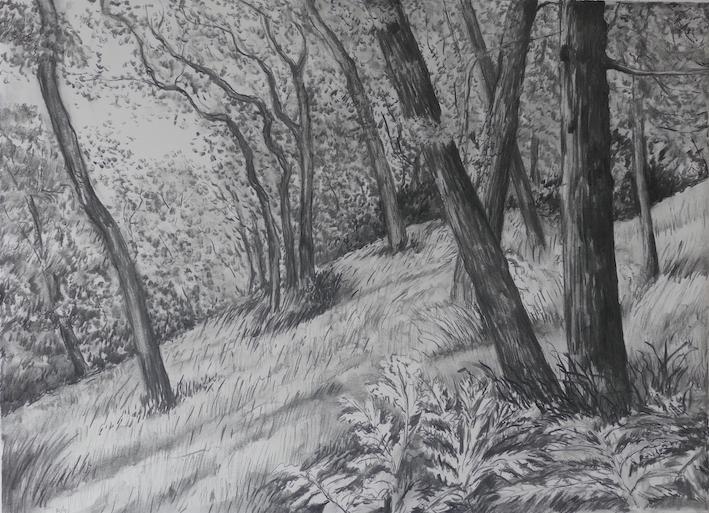 Woodland, charcoal drawing